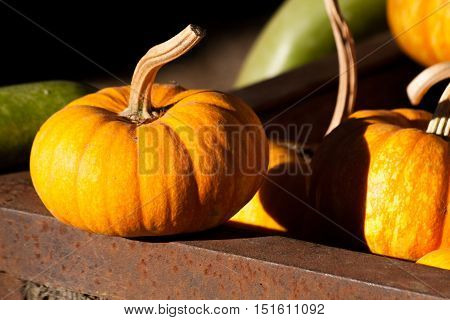 A mini pumpkin sitting on the edge of a box of more mini pumpkins with a couple of gourds in the background.