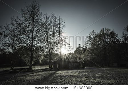 cabin in the woods with backlit flare wanted