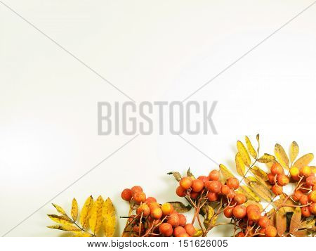 Colourfull autumn background made from leaves and rowanberries