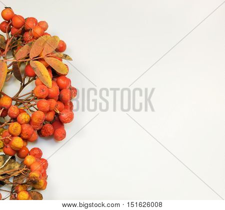 Colourfull autumn background made from leaves and rowanberry