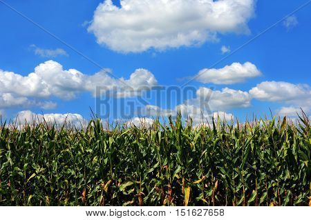 Background image shows green corn crop in a Wisconsin field. Blue sky and clouds top image.