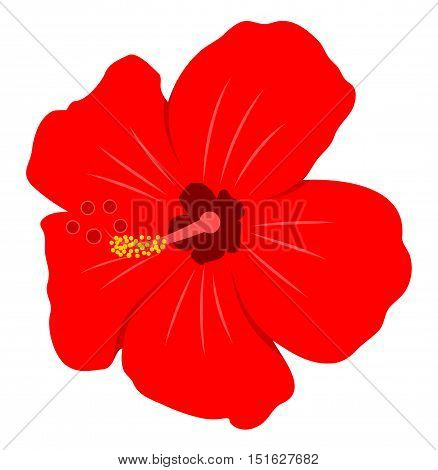 vector hibiscus flower isolated on white background