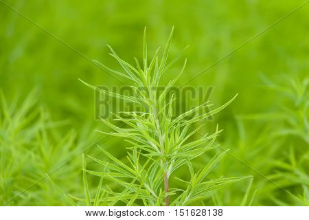 Abstract Greenery Vegetation Background