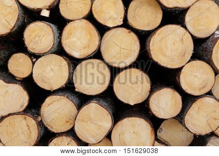 Stacked cut forest tree logs (close up)