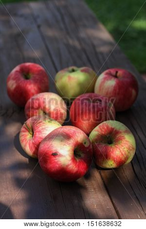 Red striped apples on the bench in the garden closeup