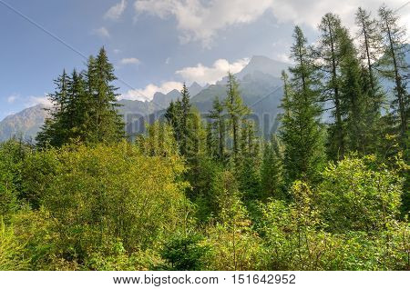 Summer mountain landscape. Mountain peaks protruding from behind the green trees.