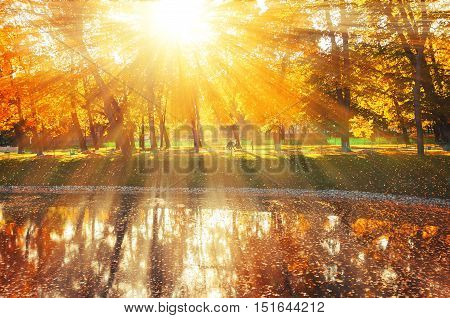 Autumn landscape of sunny autumn park under sunshine-autumn park with autumn trees and pond in soft light.Autumn landscape of autumn park with golden autumn trees and pond. Autumn park in sunlight