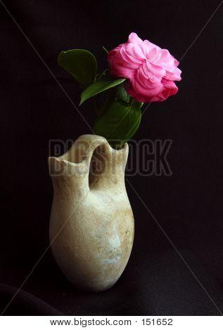 Camelia In Earthen Vase