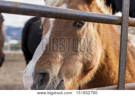 Pony looks through bars near Winthrop, Washington.