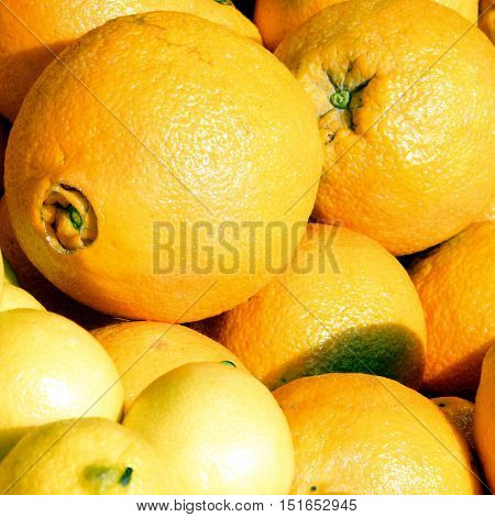 Lemons and orange on bazaar in Tel Aviv Israel January 12 2011