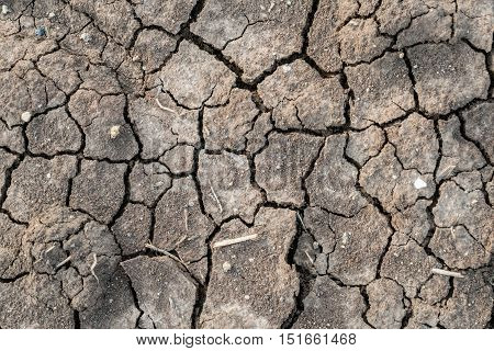 The soil looks dry and cracked in the dry season.