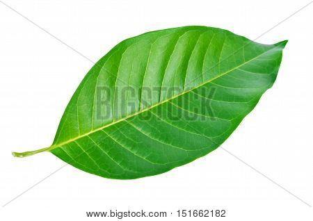 Green leaf. Isolated on a white background Clipping path.