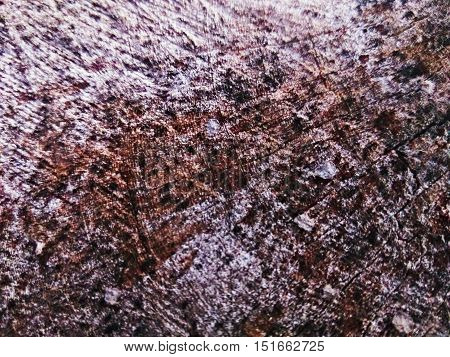 closeup shot of inner core of cut old wood texture showing lines cracks and stains