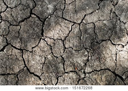 Drought land background. Close up of dry cracked earth.