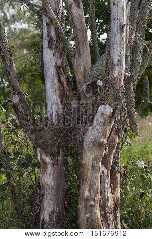 old dry wood without bark, saying slowly
