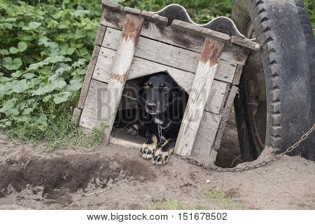 Frightened Dog Sitting In The Kennel