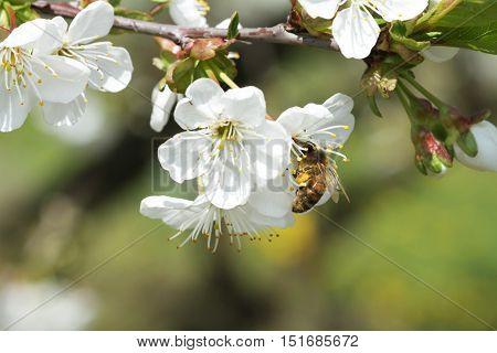 Bees On Flowers Apple 11
