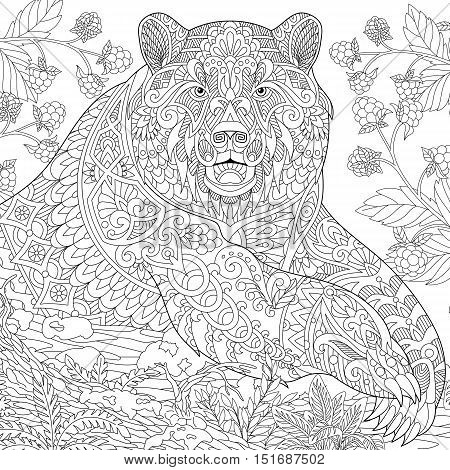 Stylized grizzly bear among blackberries or raspberries in woodland. Freehand sketch for adult anti stress coloring book page with doodle and zentangle elements.
