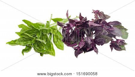 Several twigs of fresh green basil and bundle of purple basil on a light background