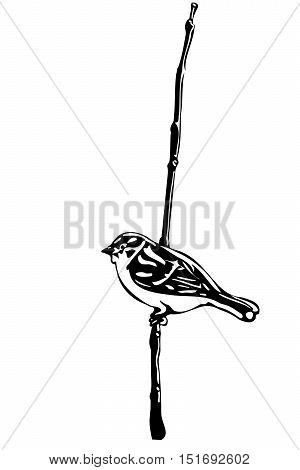 black and white vector sketch of a little bird on a branch sparrow