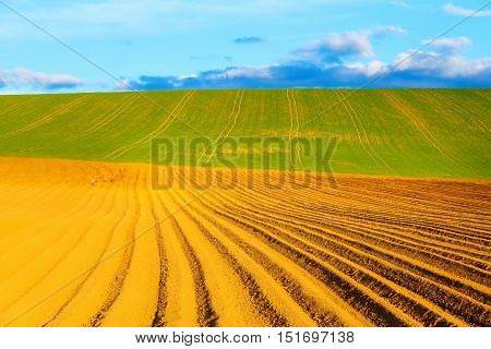 Beautiful spring plowed field and green meadow and Stork on field