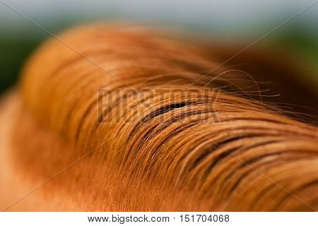 Red mane of a horse. Natural drawing