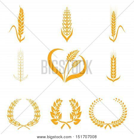 Ears of wheat or rice icons. Agricultural spikelets of wheat symbols on a white background. Organic farming farm crop seeds bread packaging or label beer. Vector ears of wheat.