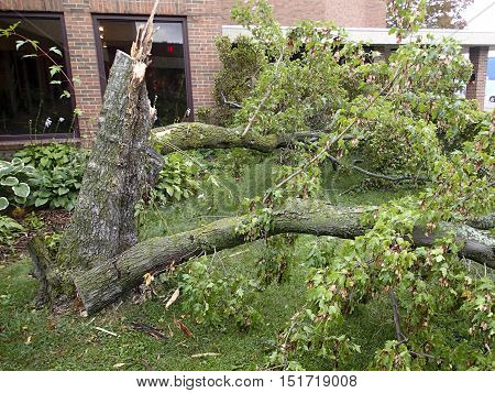 Thunder storm and a tornado cause a tree damaged property