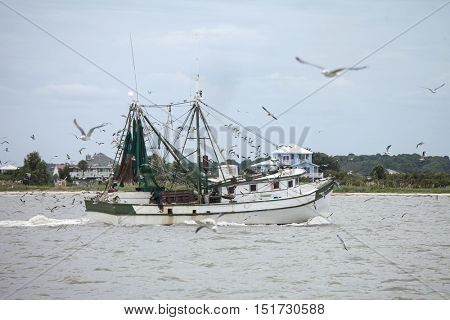 Commercial shrimping boat surrounded by gulls off the coast of South Carolina