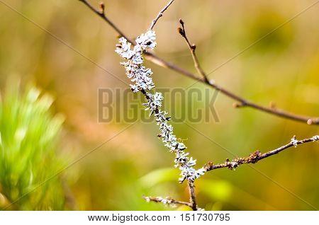 white lichen grown on autumnal forest trees