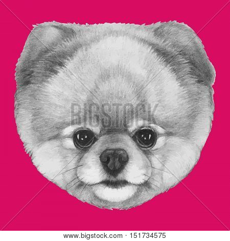 Hand drawn portrait of Pomeranian dog on colored background.