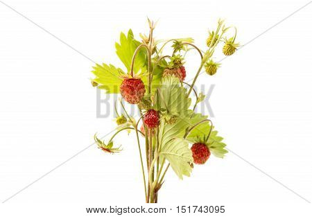 small wild strawberry isolated on white background
