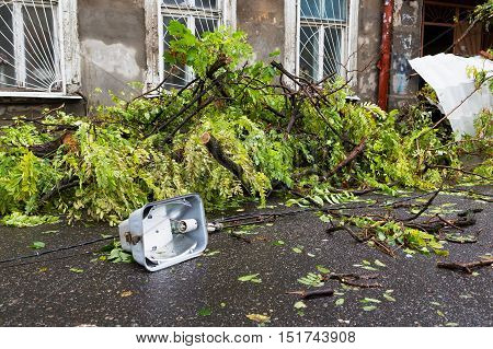 Hurricane Christie. Heavy Rain And Gale - Force Gusts Of Wind Caused Accident - Old Tree During Stor