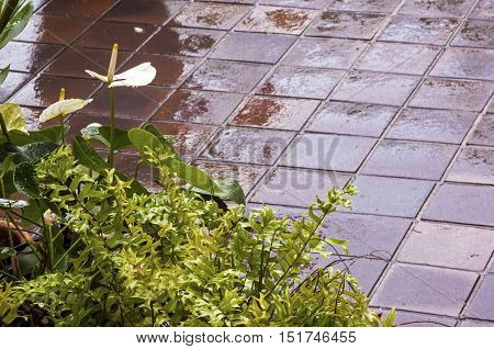 Wet tiled patio patterns and textures with fern and white anthurium in foreground
