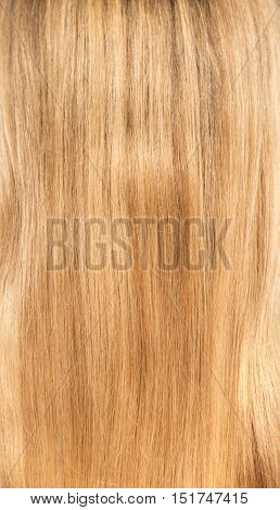 Blond hair blonde close up. Hair texture.