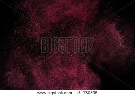 Magenta Powder Explosion On Black Background.