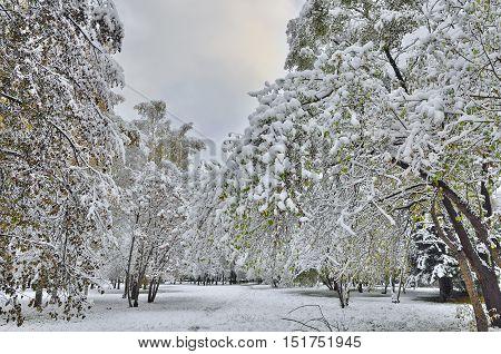 Autumn city park under first snow. Winter landscape.