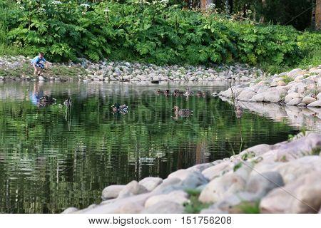 duck bird on the pond in summer season