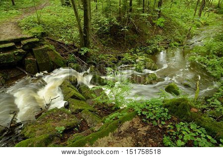 A small but fast river flowing in the forest.