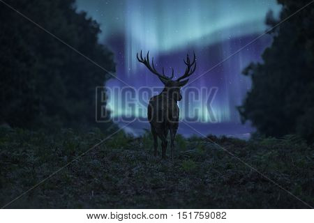 Stunning Landscape Image Of Red Deer Stag Silhouetted Against Northern Lights Aurora Borealis Night