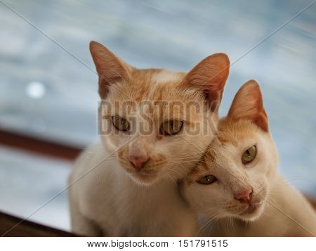 A couple cats showing love and tenderness