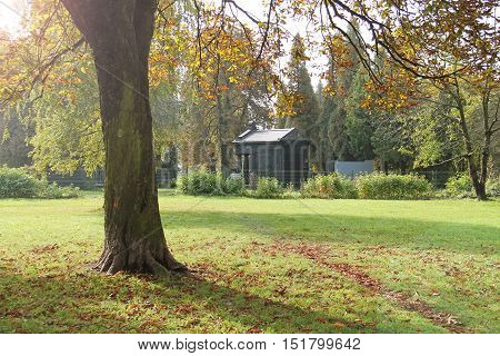 tree with colorful leaves and old jewish tomb and headstones at the cemetery at the background in autumn morning