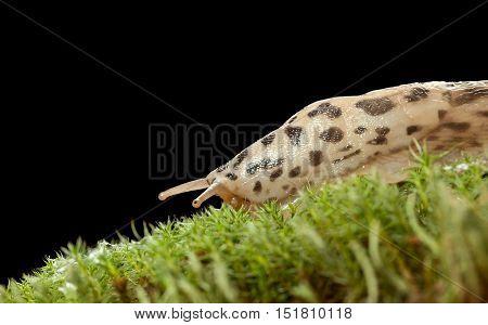 Sliding Slug