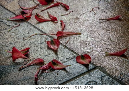 Still life of dropped red petals and stamens on the stone tile floor. Life is finite.