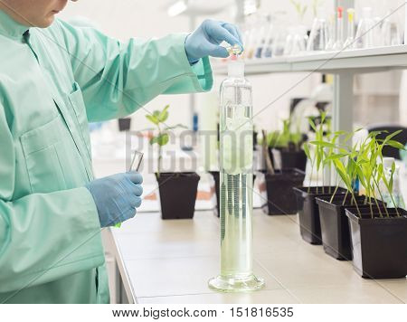 Lab Technician Pours Liquid In High Flask.