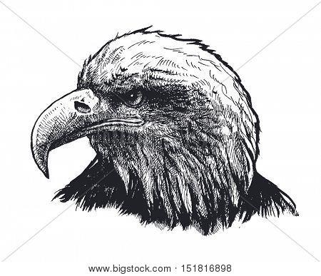 Eagle Hand drawn Vector illustration.