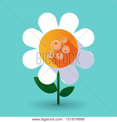 Long Shadow Daisy Flower With Oocytes