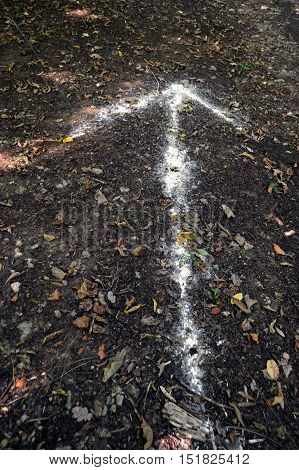 White arrow painted on the ground on a path of a wood.