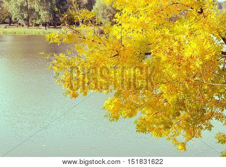 Changing colors. Vintage autumn season landscape at the Tisza backwater in Tiszalok, Hungary. Hungarian countryside. Autumn yellow leaves.