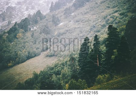 Coniferous Forest Landscape aerial view Travel serene scenic view moody weather